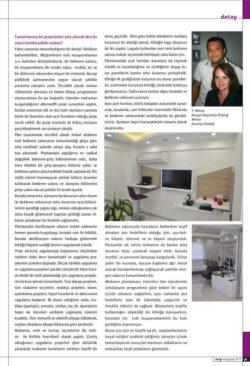 IDO-Page-5